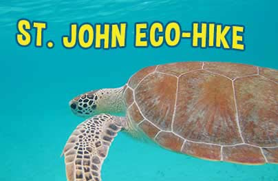 Eco Hike  Snorkel Tour Lind Point to Honeymoon