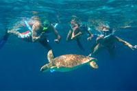 Island Wilson Excursions
