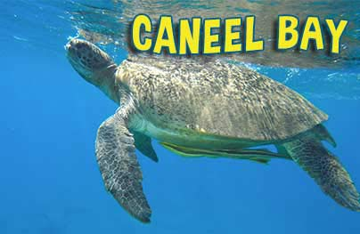 Caneel Bay Kayak Hike  Snorkel Adventure