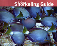 ST. CROIX SNORKELING GUIDE