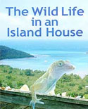 WILD LIFE IN AN ISLAND HOUSE