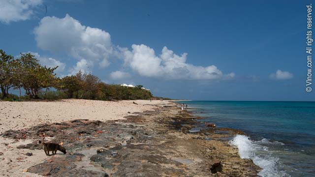 Dorsch Is A Beautiful Long Beach Located Short Distance From Frederiksted The Sline Mostly Sandy But There Are Few Rocky Spots This Case