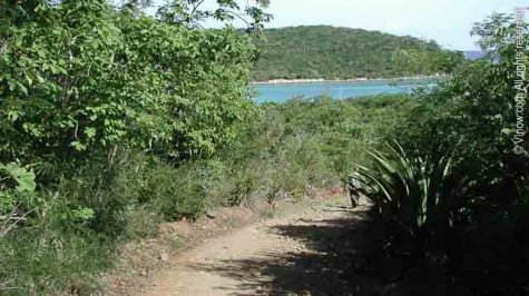 Salt Pond Bay Trail