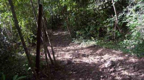 Lind Point Trail Virgin Islands National Park
