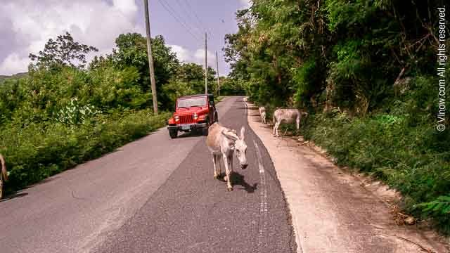 Keep Left - USVI Driving Tips