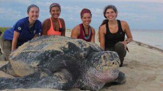 Sea Turtle Census Initiative