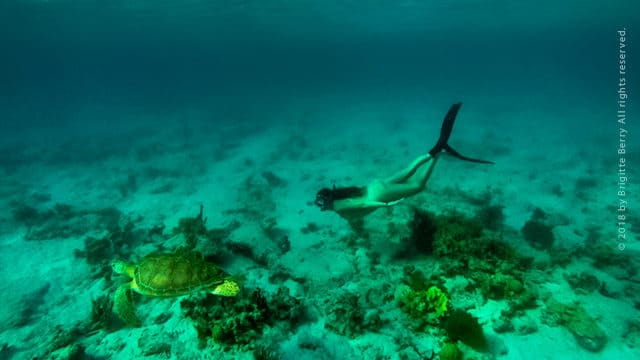 Top 5 Beaches for Snorkeling on St. Thomas