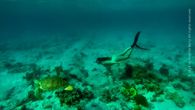 Freediving Virgin Islands